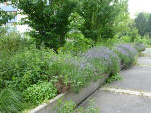 terrasses d'alex